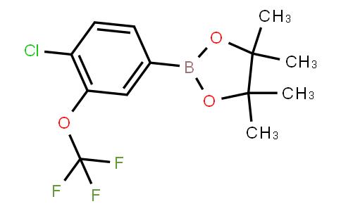 4-Chloro-3-(trifluoromethoxy)phenylboronic acid pinacol ester