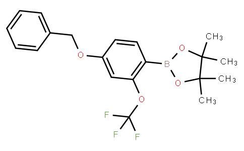 4-Benzyloxy-2-(trifluoromethoxy)phenylboronic acid pinacol ester