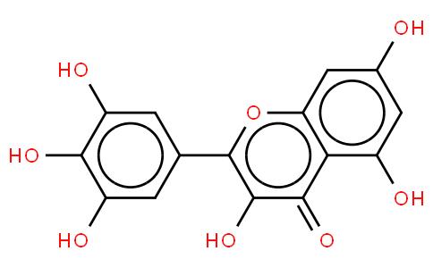Myricetin